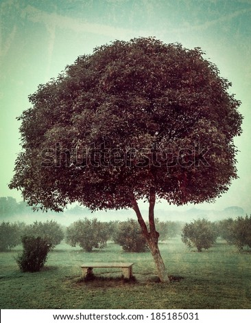 Vintage retro hipster style travel image of loneliness solitude  sadness background - lonely tree and seating bench in morning mist fog with grunge texture overlaid - stock photo