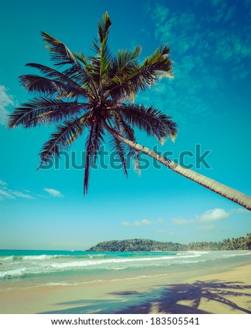 Vintage retro hipster style travel image of tropical paradise idyllic beach with palm. Sri Lanka - stock photo