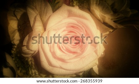 vintage rose head background, condolences card background - stock photo