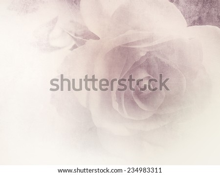Vintage rose - soft floral background - stock photo