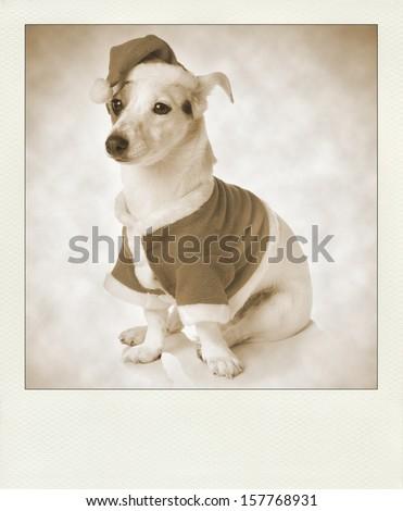 Vintage sepia polaroid with dog as santa. - stock photo