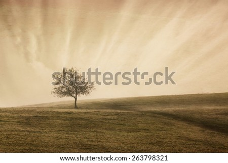 vintage sepia toned landscape with lonely tree in small hill, sunrise misty time  - stock photo
