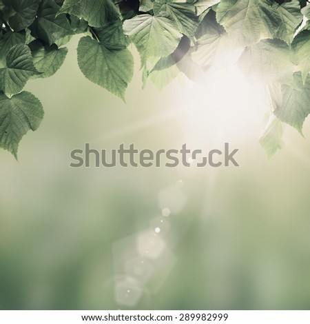 Vintage spring forest trees leaf. nature green wood sunlight backgrounds. - stock photo