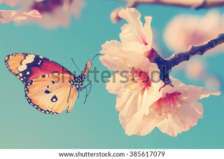 Vintage spring image with butterfly and blossoming fruit tree against blue sky. Springtime nature abstract