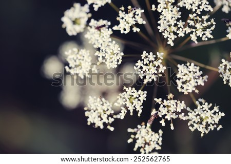 vintage spring white flowers on dark background - stock photo