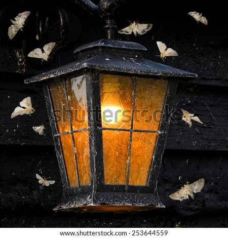 Vintage street light and moths flying around - stock photo