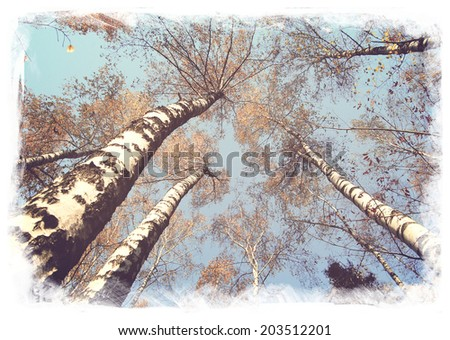vintage style autumn forest of birches on old paper background    - stock photo