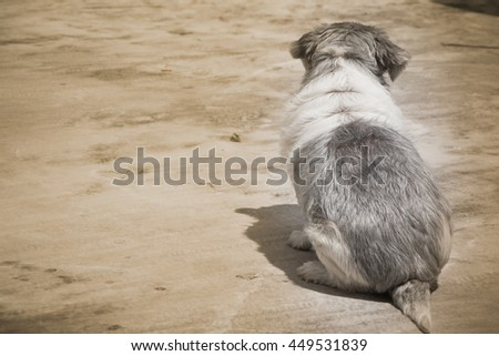 Vintage Style, Back of Cute Lonely Black and White Shih Tzu Dog, Standing on a Concrete Floor, Waiting for Family Coming Back Home. Homeless Concept. - stock photo