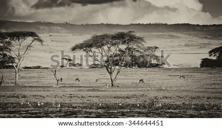 Vintage style black and white image of the shore of Lake Naivasha in Kenya, Africa