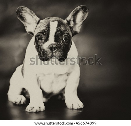 Vintage style doggy - stock photo