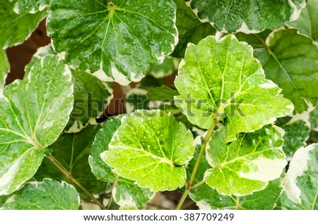 vintage style green fresh. Water drops on fresh green leaves.Green background with leaves. - stock photo