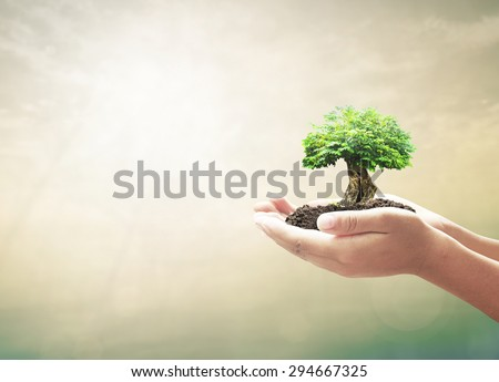 Vintage style. Human hands holding medium green spring plant or big tree with soil on blurred abstract beautiful sea or ocean or forest or desert over sunset background. Ecology concept. - stock photo