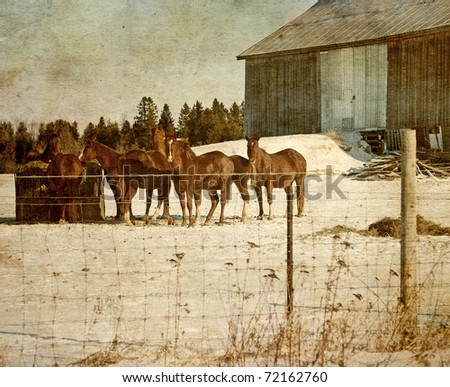 Vintage style image of a group of chestnut brown horses feeding on a farm in winter. - stock photo