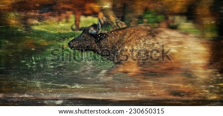 Vintage style image of an African buffalo crossing a river in the Lake Nakuru National Park - Kenya - stock photo