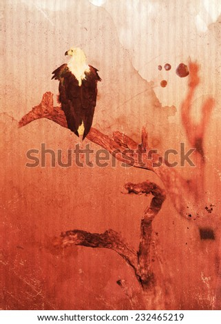 Vintage style image of an African fish eagle at sunset, Kruger National Park, South Africa - stock photo