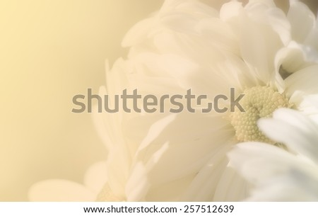 Vintage style of daisy petals with paper texture for soft background, monotone. - stock photo