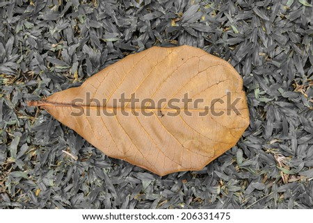 Vintage Style of Dried Fallen Leave on the Ground. - stock photo