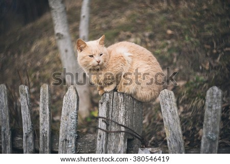 """Vintage style photo from a domestic Cat on old fence.With custom white balance and color filters. This image was created with rare and special vintage lens with unique """"swirly bokeh"""" - stock photo"""