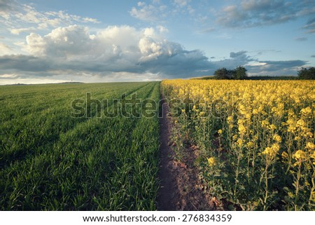Vintage style photo of beautiful field landscape - stock photo
