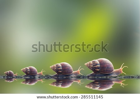 vintage style photo of snail family walking in line on water - stock photo