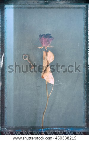Vintage style processed image of withered red rose with small rusty key. - stock photo