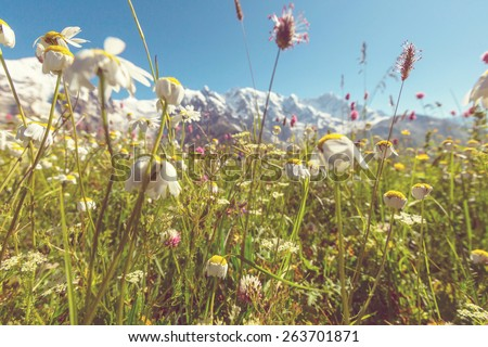 Vintage style summer mountains meadow  - stock photo