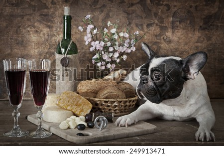 Vintage styled photo of French bulldog lying on the table with cheese plate and wine bottle  - stock photo