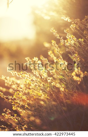 vintage sunny photo of wild meadow grass in field on natural sunny background. Fresh morning outdoor photo with warm summer colors
