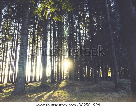 Vintage sunset in the forest, retro film filtered, instagram style - stock photo