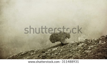 vintage textured  misty landscape with alone small tree on the top of rocky cliff- some noise are added for stronger vintage effect  - stock photo