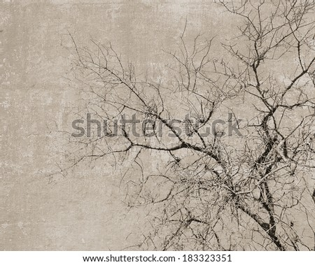 Vintage textured postcard with a black silhouette of a leafless tree - stock photo
