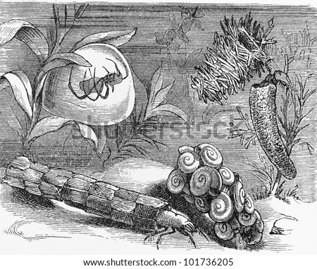 Vintage 19th century drawing representing various underwater insects - Picture from Meyers Lexikon book (written in German language) published in 1908 Leipzig - Germany. - stock photo