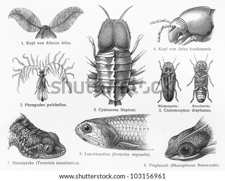 Vintage 19th century old drawing of nocturnal insects and animals  - Picture from Meyers Lexikon book (written in German language) published in 1908 Leipzig - Germany. - stock photo