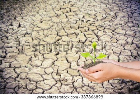 vintage tone image of  two woman hand holding and caring a young green plant over soil crack,planting tree,love nature, environment. ecology concept