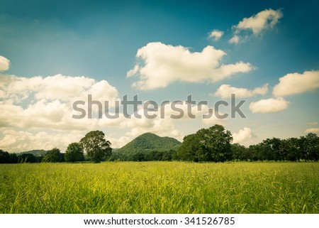 Vintage toned of green field with clear sky and mountain background - stock photo