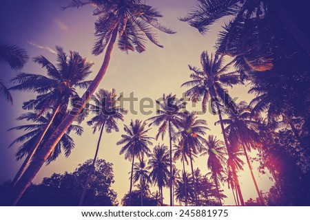 Vintage toned picture of palms silhouettes against sunrise. - stock photo