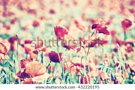 Vintage toned poppy flowers, shallow depth of field, natural artistic background.