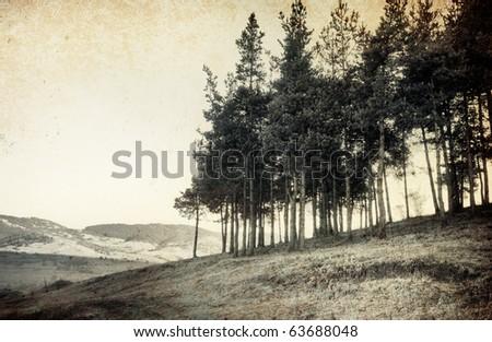 vintage tree photo; old landscape - stock photo