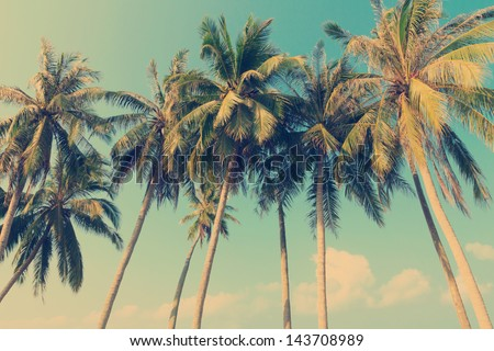 Vintage tropical palm trees - stock photo