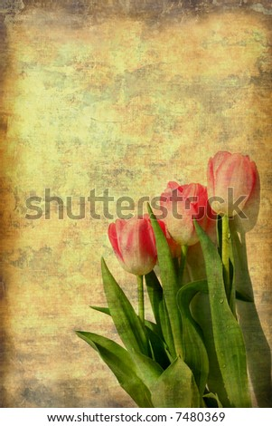 Vintage Tulips Grunge From Photograph - stock photo