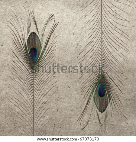 vintage wallpaper background with feather - stock photo