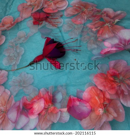 vintage wallpaper background with flowers of geranium and fuchsia - stock photo