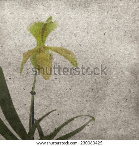 vintage wallpaper background with lady's slipper orchid flower - stock photo