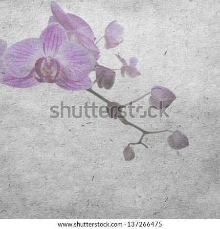 vintage wallpaper background with orchid - stock photo