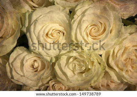 vintage wallpaper background with white  rose - stock photo