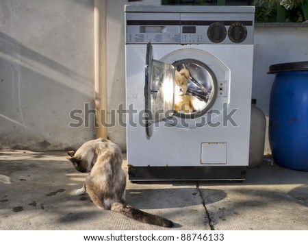 vintage washing machine with a cat and  a teddy bear inside - stock photo
