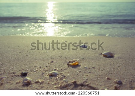 Vintage Waves approaching sea shells lying on sand during sunrise. - stock photo