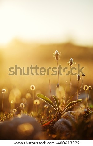 vintage wild meadow plants in spring field in morning on natural yellow orange sunny background. Outdoor fresh photo - stock photo