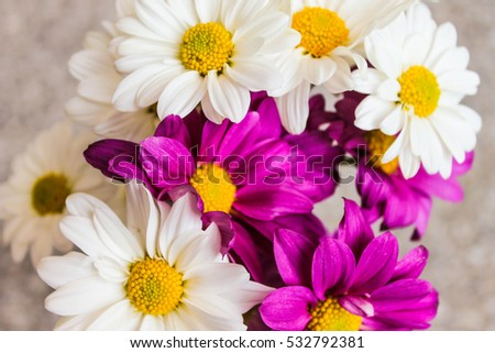 Violet and White Daisies