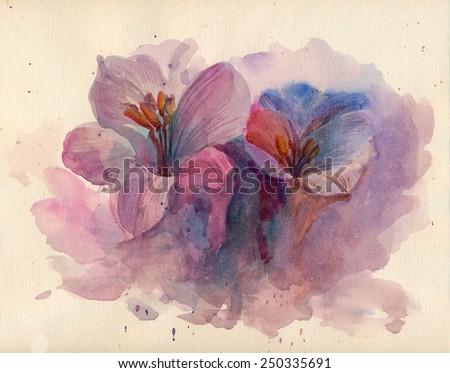 Violet crocuses flowers in watercolor - stock photo